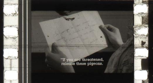 pigeonrsz.jpg